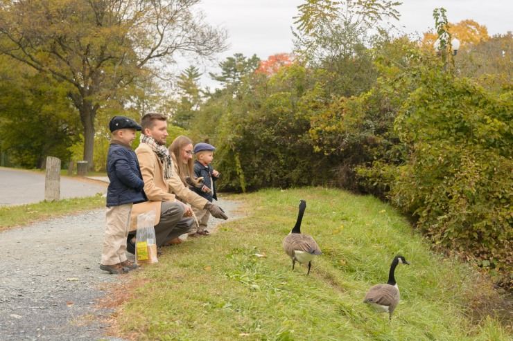 Family feeding geese