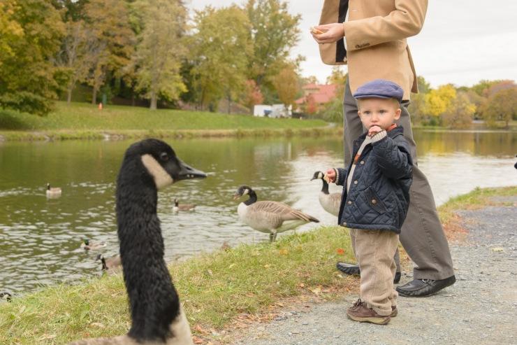 Toddler looking at goose