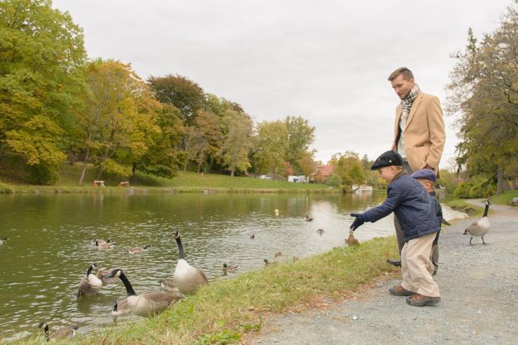 Boy feeding geese